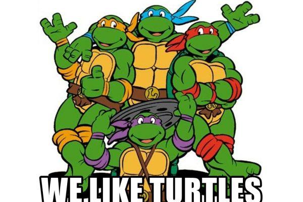 Żółwia ściąga do pobrania o funkcjach